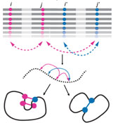 Protein Plasticity and Evolution